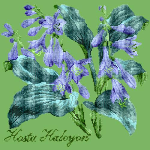 Hosta Halcyon Needlepoint Kit Elizabeth Bradley Design Grass Green
