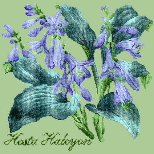 Hosta Halcyon Needlepoint Kit Elizabeth Bradley Design Pale Green