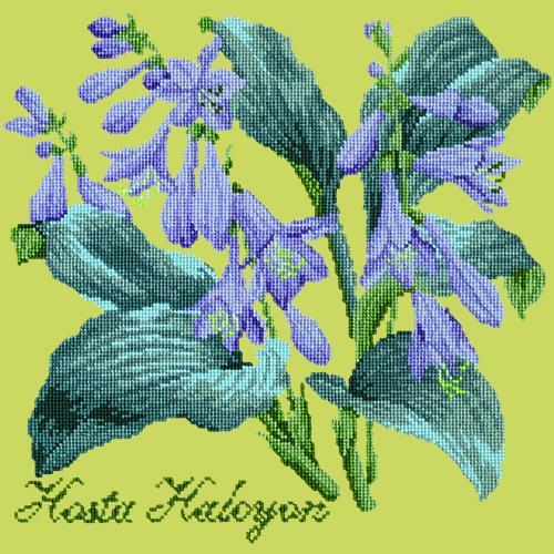Hosta Halcyon Needlepoint Kit Elizabeth Bradley Design Pale Lime