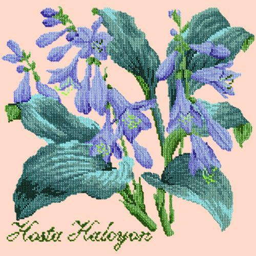 Hosta Halcyon Needlepoint Kit Elizabeth Bradley Design Salmon Pink