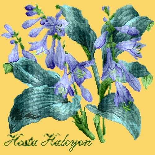 Hosta Halcyon Needlepoint Kit Elizabeth Bradley Design Sunflower Yellow