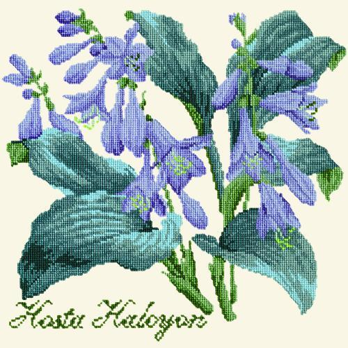 Hosta Halcyon Needlepoint Kit Elizabeth Bradley Design Winter White