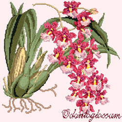 Odontoglossum (Tiger Orchid) Needlepoint Kit Elizabeth Bradley Design Cream