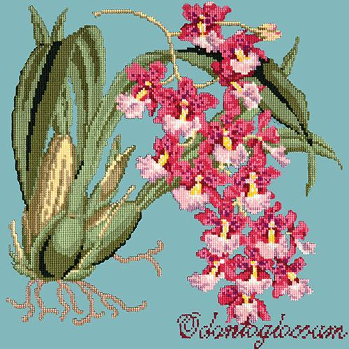 Odontoglossum (Tiger Orchid) Needlepoint Kit Elizabeth Bradley Design Duck Egg Blue