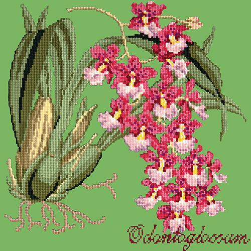 Odontoglossum (Tiger Orchid) Needlepoint Kit Elizabeth Bradley Design Grass Green