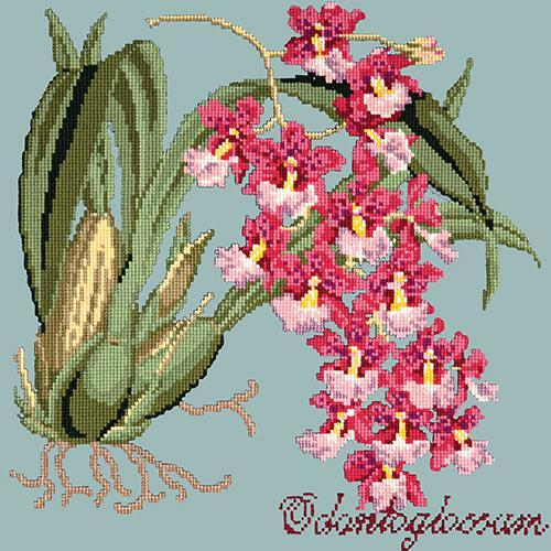 Odontoglossum (Tiger Orchid) Needlepoint Kit Elizabeth Bradley Design Pale Blue