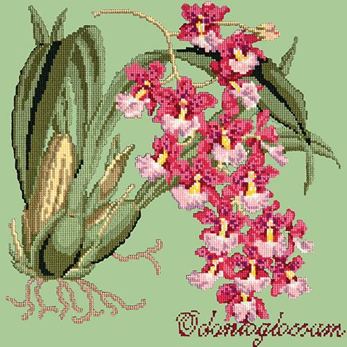 Odontoglossum (Tiger Orchid) Needlepoint Kit Elizabeth Bradley Design Pale Green