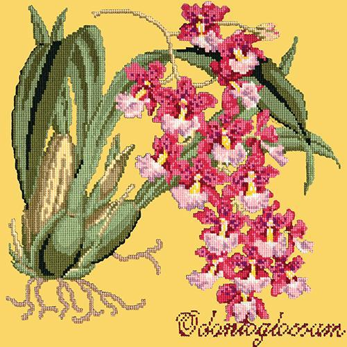 Odontoglossum (Tiger Orchid) Needlepoint Kit Elizabeth Bradley Design Sunflower Yellow