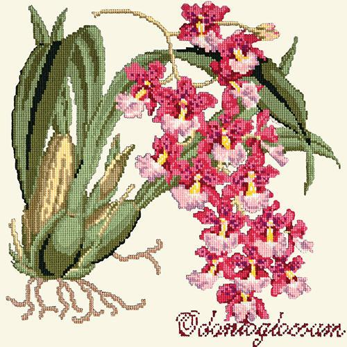 Odontoglossum (Tiger Orchid) Needlepoint Kit Elizabeth Bradley Design Winter White