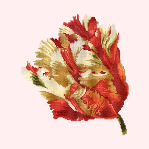 Parrot Tulip Needlepoint Kit Elizabeth Bradley Design Cream