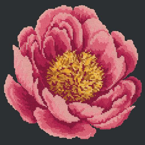 Peony Needlepoint Kit Elizabeth Bradley Design Black
