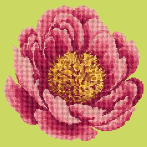 Peony Needlepoint Kit Elizabeth Bradley Design Pale Lime