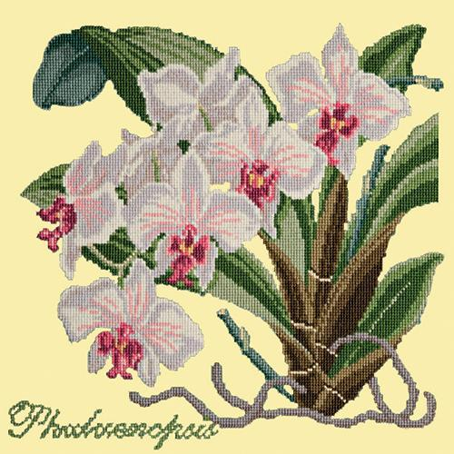 Phalaenopsis (Moth Orchid) Needlepoint Kit Elizabeth Bradley Design Butter Yellow
