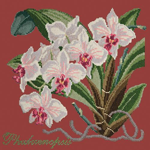 Phalaenopsis (Moth Orchid) Needlepoint Kit Elizabeth Bradley Design Dark Red