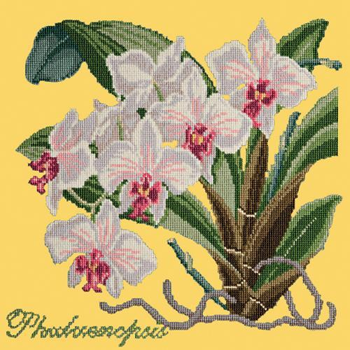 Phalaenopsis (Moth Orchid) Needlepoint Kit Elizabeth Bradley Design Sunflower Yellow
