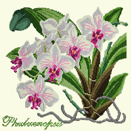 Phalaenopsis (Moth Orchid) Needlepoint Kit Elizabeth Bradley Design Winter White