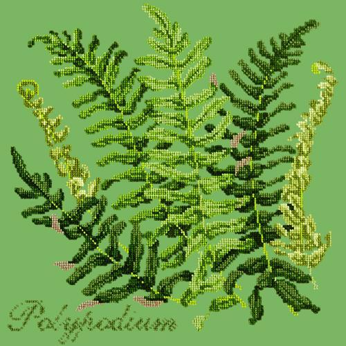 Polypodium Needlepoint Kit Elizabeth Bradley Design Grass Green