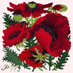 Red Poppy Needlepoint Kit Elizabeth Bradley Design Cream
