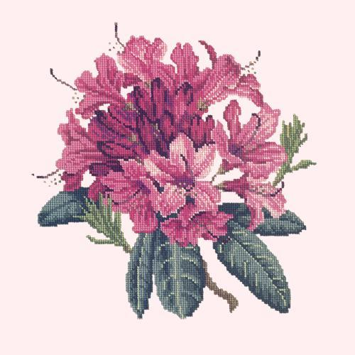 Rhododendron Needlepoint Kit Elizabeth Bradley Design Cream