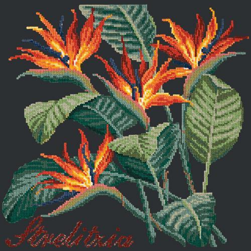 Strelitzia (Bird of Paradise) Needlepoint Kit Elizabeth Bradley Design Black