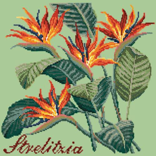 Strelitzia (Bird of Paradise) Needlepoint Kit Elizabeth Bradley Design Pale Green