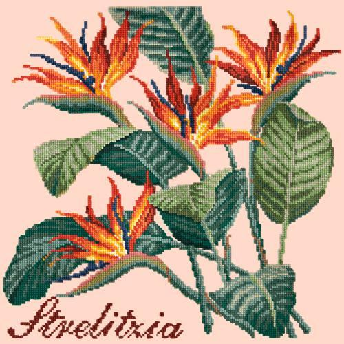 Strelitzia (Bird of Paradise) Needlepoint Kit Elizabeth Bradley Design Salmon Pink