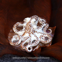 Load image into Gallery viewer, Baby Octopus Sculpture - E