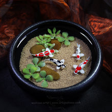 Load image into Gallery viewer, Solidarity III - 100mm Miniature Koi Pond