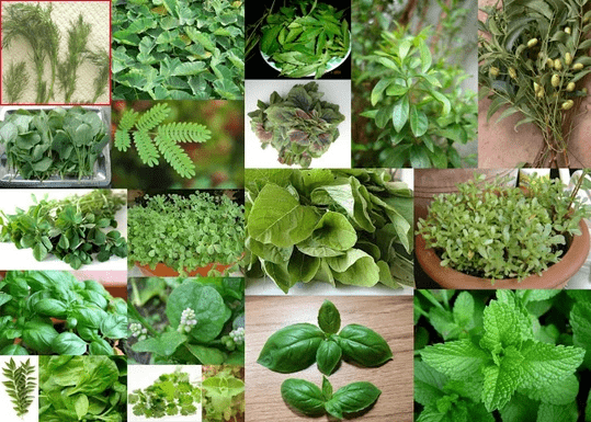 Benefits of Leafy Vegetables