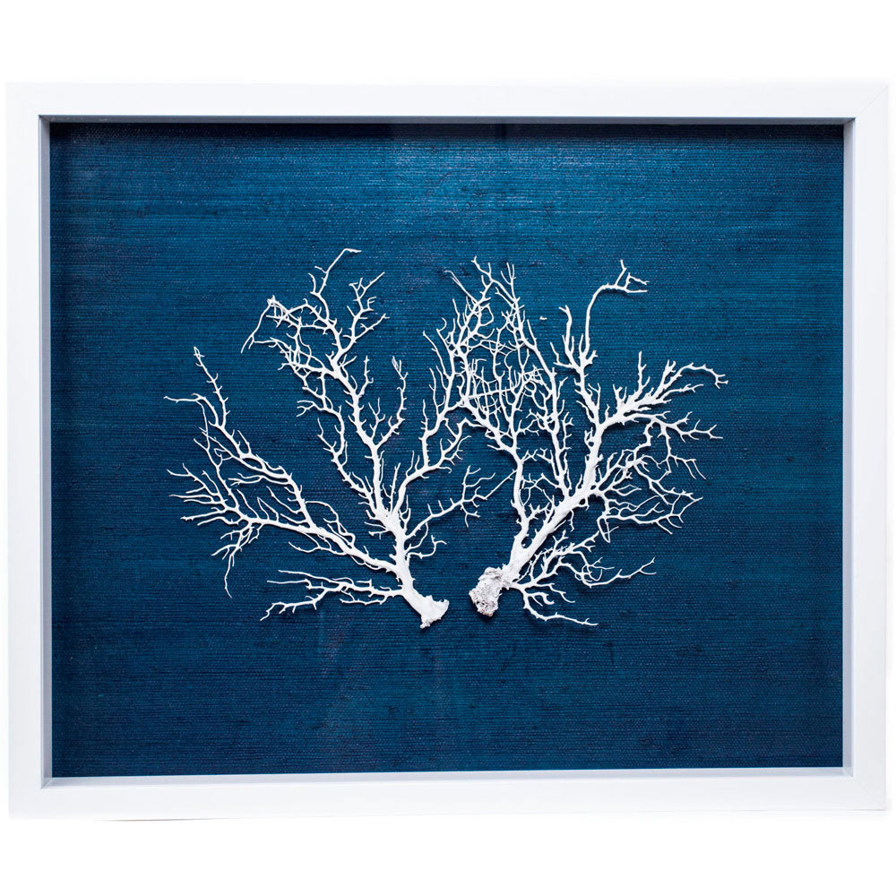 Sealife Shadow Box - Navy/White (w/f)