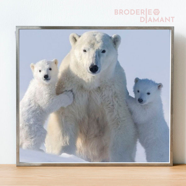 | Famille Ours Blanc
