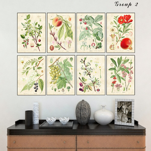 Vintage Botanical Print Reproduction