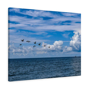 Canvas Wrap: Pelicans Flying over the Water