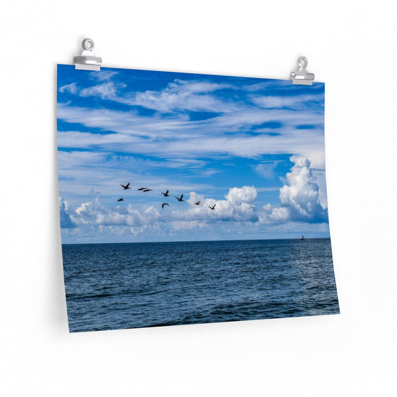 Premium Matte Poster Print: Pelicans flying over the Water