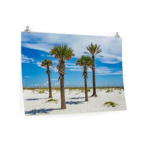 Premium Matte Poster: Palm Trees & Ocean Breeze
