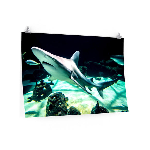 Premium Matte Poster Print: Shark in the Water!