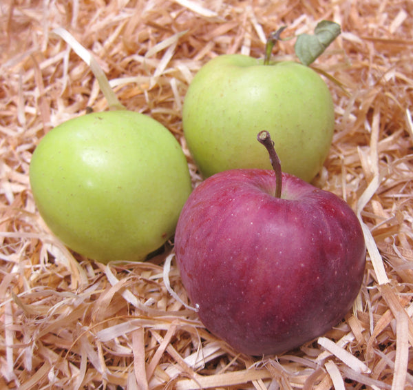 Check stored apples for signs of damage and remove from batch