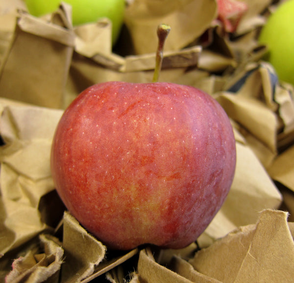 Inspect apples for bruises and damage before storing
