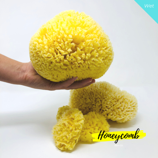Mum, Dad & Baby Set - Natural Sea Sponge