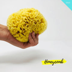 15 cm Honeycomb Organic Greek Sea Sponge - Natural Sea Sponge