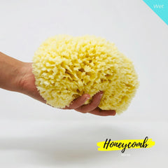 16.5 cm Honeycomb Organic Greek Sea Sponge - Natural Sea Sponge