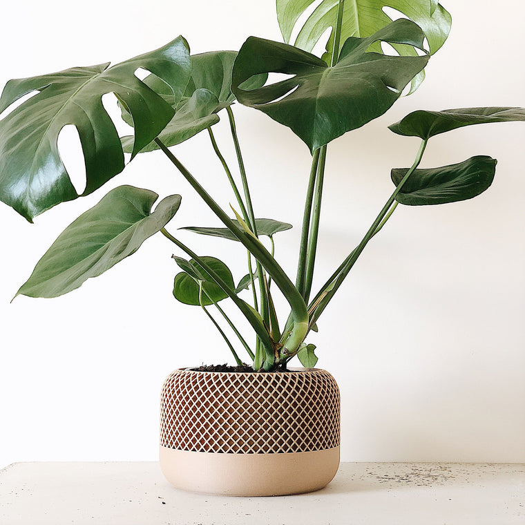 Scandi Etched Plant Pot