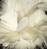Feather Flower Double