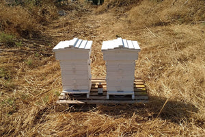 Galil Soil Farm Bee Hives