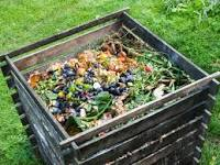 What Every Gardener Should Know About Compost