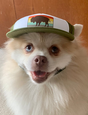 Pomeranian wearing bison trucker hat for dogs
