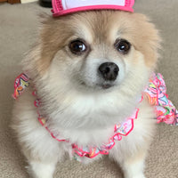 Pomeranian wearing pink bison trucker hat for dogs