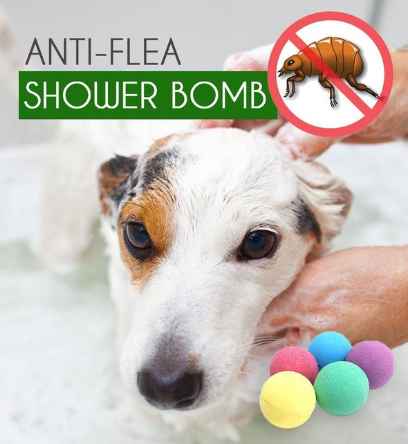 Anti-Flea Shower Care Bomb for Dogs and Cat (Pack of 3)