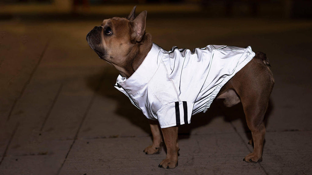Canada Pooch Anorak Night Vision Reflective Jacket