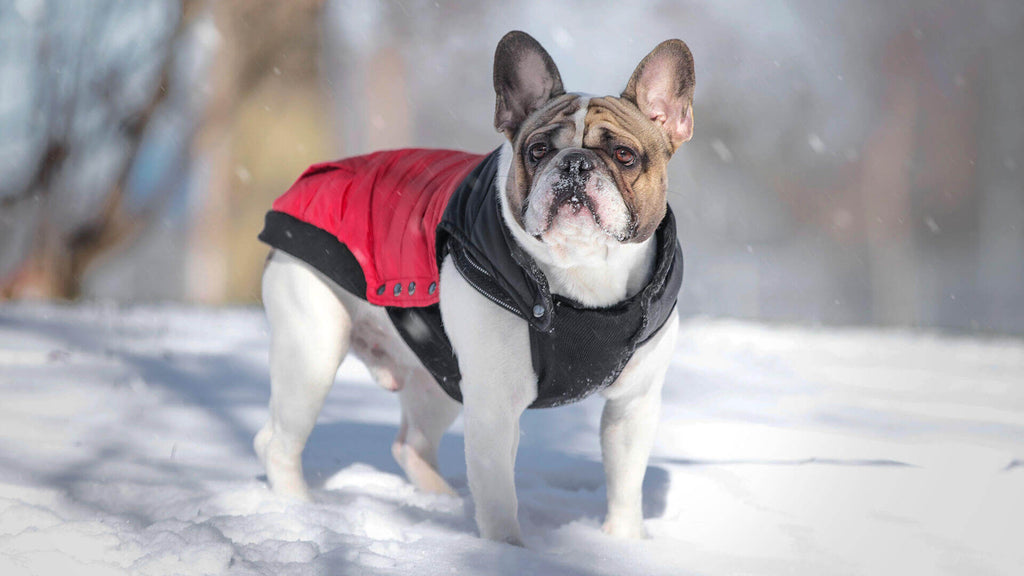 Canada Pooch Summit Stretch Vest Red